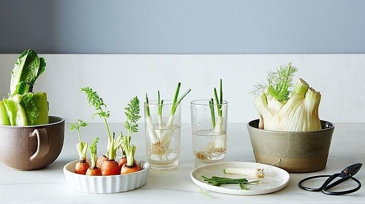 Tự trồng vườn rau gia vị nơi góc bếp, tại sao không nhỉ? - ảnh 19