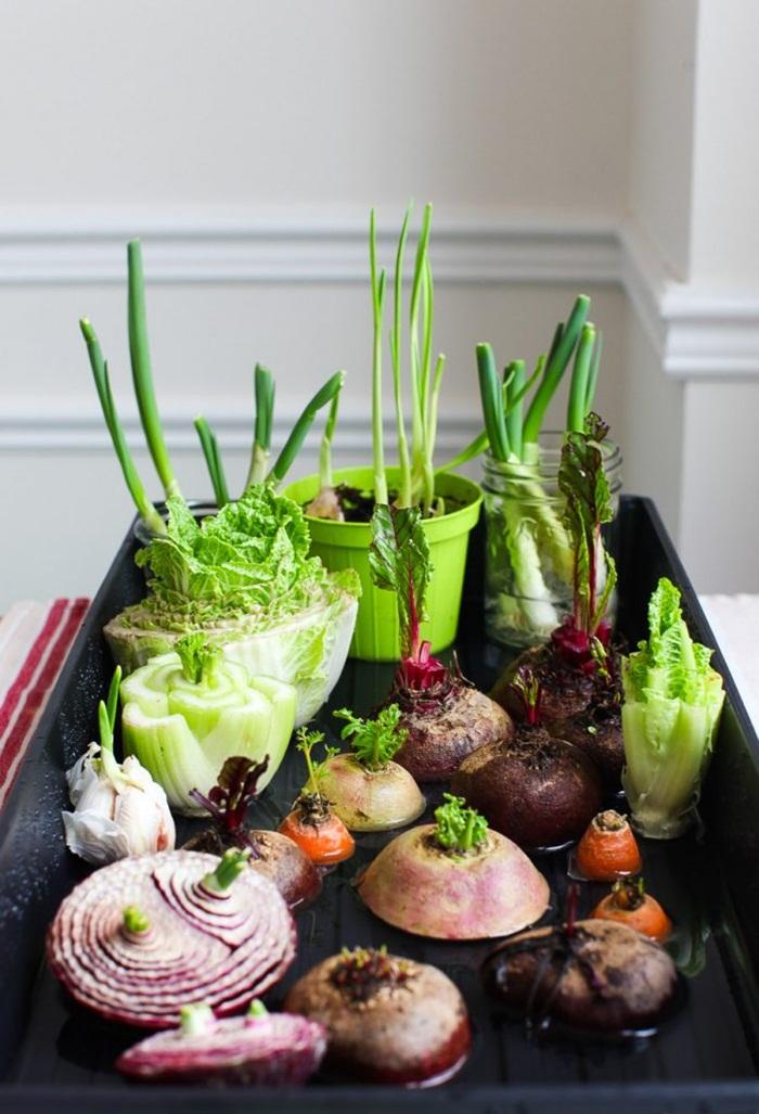 Tự trồng vườn rau gia vị nơi góc bếp, tại sao không nhỉ? - ảnh 1