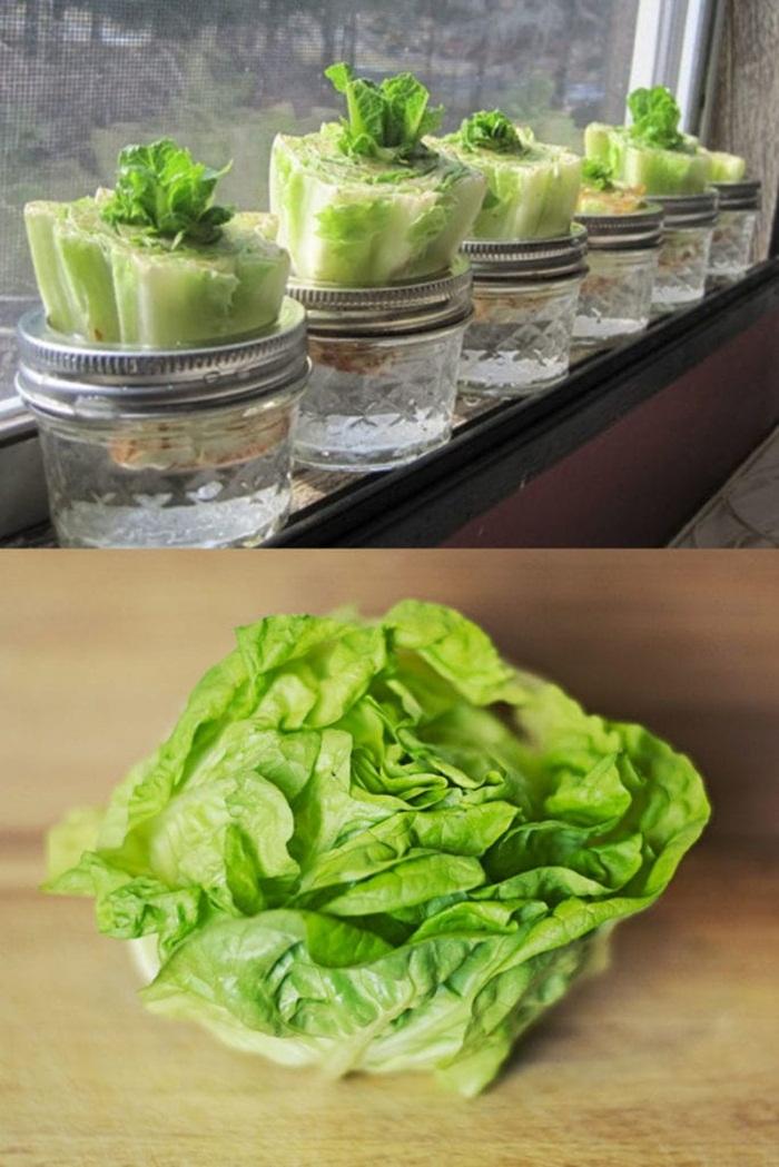 Tự trồng vườn rau gia vị nơi góc bếp, tại sao không nhỉ? - ảnh 14