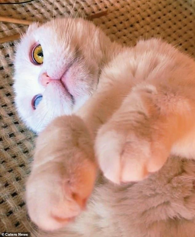 Sở hữu cặp mắt 2 màu đẹp khó tả, chú mèo vẫn bị hắt hủi vì vẻ ngoài khác lạ, phải tìm người cưu mang - Ảnh 2.