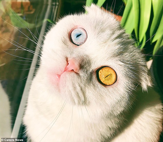 Sở hữu cặp mắt 2 màu đẹp khó tả, chú mèo vẫn bị hắt hủi vì vẻ ngoài khác lạ, phải tìm người cưu mang - Ảnh 1.
