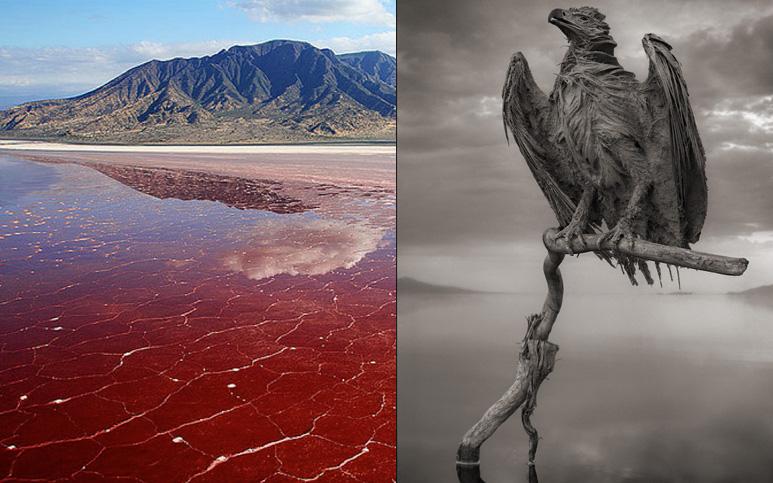 """Hồ nước đỏ như máu tưởng đẹp nhưng lại là """"mồ chôn tập thể"""" có thể biến loạt sinh vật thành tượng đá"""