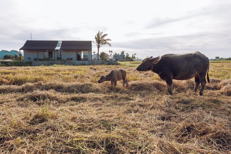 Khi có mảnh đất ở quê, đừng bỏ lỡ cơ hội xây ngôi nhà view cánh đồng lúa đắt giá như thế này - Ảnh 5.