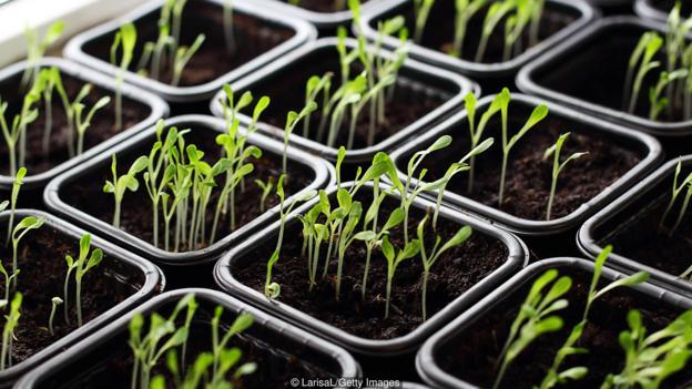 Anh quốc: Những khu vườn tự trồng tại nhà giữa đại dịch COVID-19 - Ảnh 1.