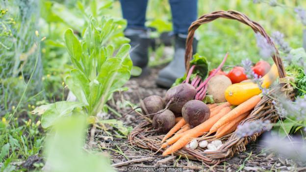 Anh quốc: Những khu vườn tự trồng tại nhà giữa đại dịch COVID-19 - Ảnh 2.