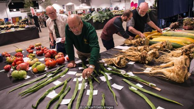 Anh quốc: Những khu vườn tự trồng tại nhà giữa đại dịch COVID-19 - Ảnh 4.