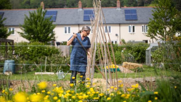 Anh quốc: Những khu vườn tự trồng tại nhà giữa đại dịch COVID-19 - Ảnh 5.