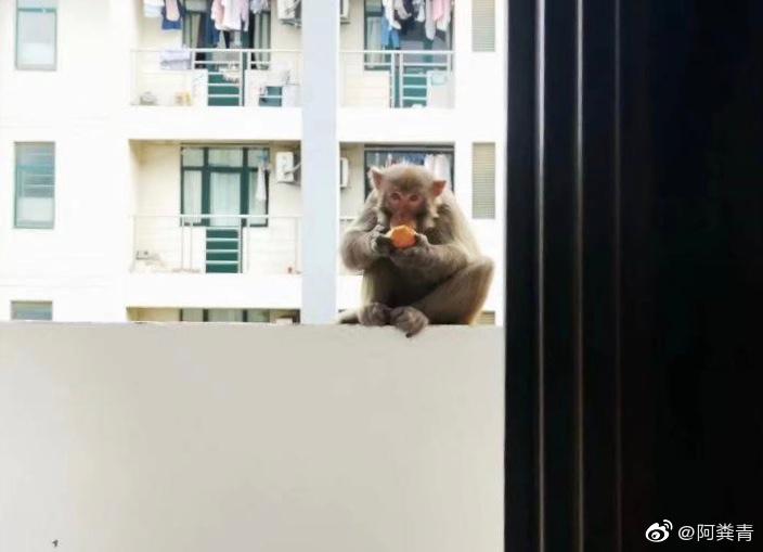 Quay lại KTX sau gần nửa năm nghỉ phòng dịch, sinh viên hốt hoảng thấy khỉ nhưng thông báo của trường mới gây cười: Các em đánh không lại đâu! - Ảnh 1.