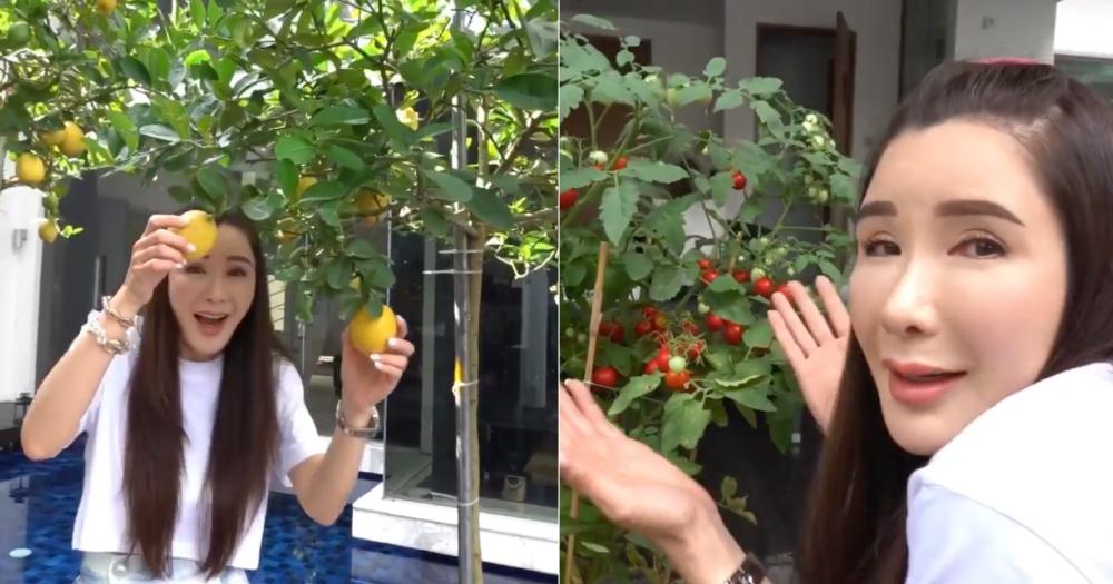 Hot mom xinh đẹp nhận trợ cấp 10 tỷ đồng/ tháng từ chồng vẫn tự tay trồng rau quả hữu cơ - Ảnh 6.
