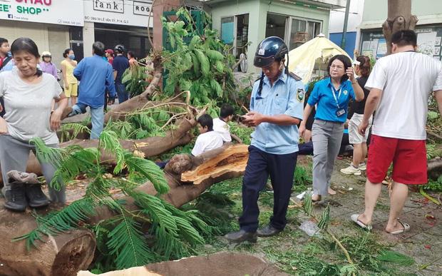 Thi thể học sinh tử vong do cây phượng bật gốc đè trúng đã được bàn giao cho gia đình