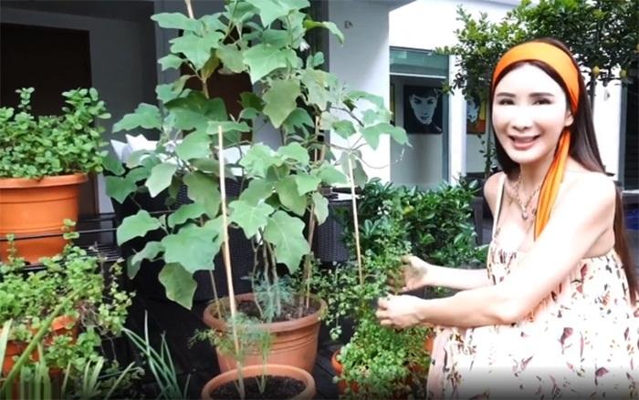 Hot mom xinh đẹp nhận trợ cấp 10 tỷ đồng/ tháng từ chồng vẫn tự tay trồng rau quả hữu cơ - Ảnh 3.