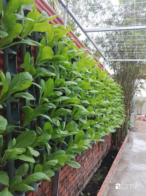 Bức tường xanh thiết kế từ ống nước giúp quanh năm luôn đủ rau ăn ở TP. HCM - Ảnh 1.