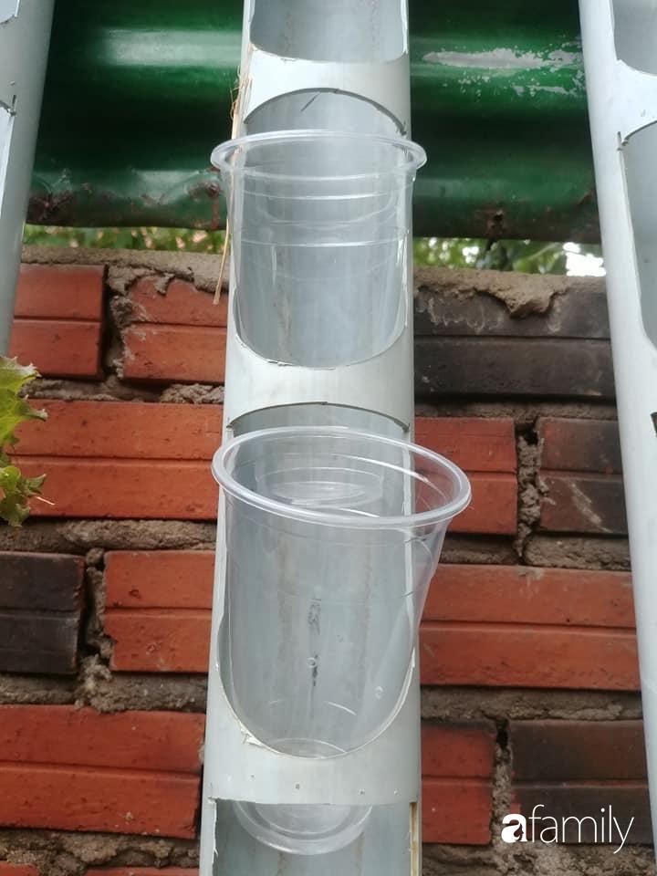 Bức tường xanh thiết kế từ ống nước giúp quanh năm luôn đủ rau ăn ở TP. HCM - Ảnh 5.