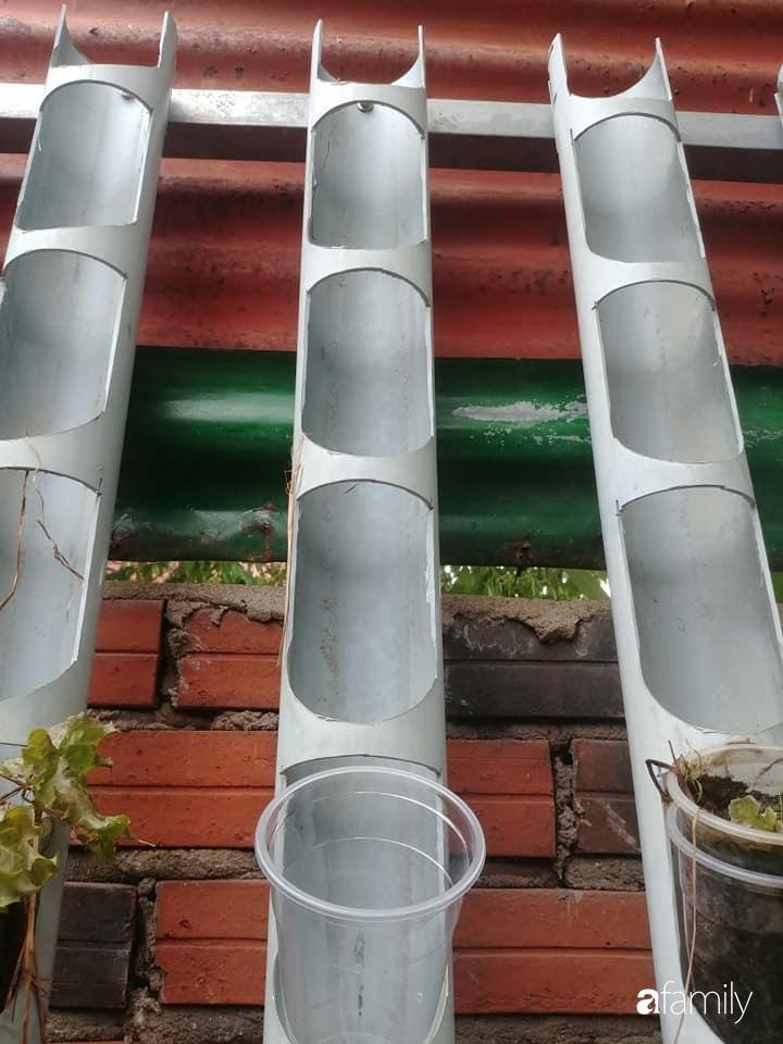 Bức tường xanh thiết kế từ ống nước giúp quanh năm luôn đủ rau ăn ở TP. HCM - Ảnh 4.