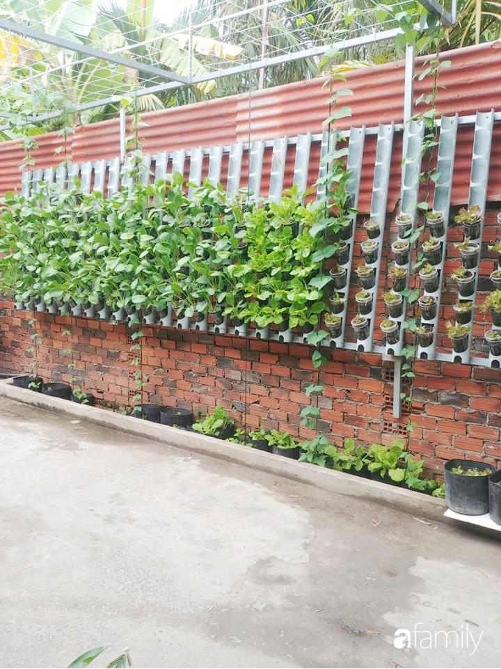 Bức tường xanh thiết kế từ ống nước giúp quanh năm luôn đủ rau ăn ở TP. HCM - Ảnh 10.