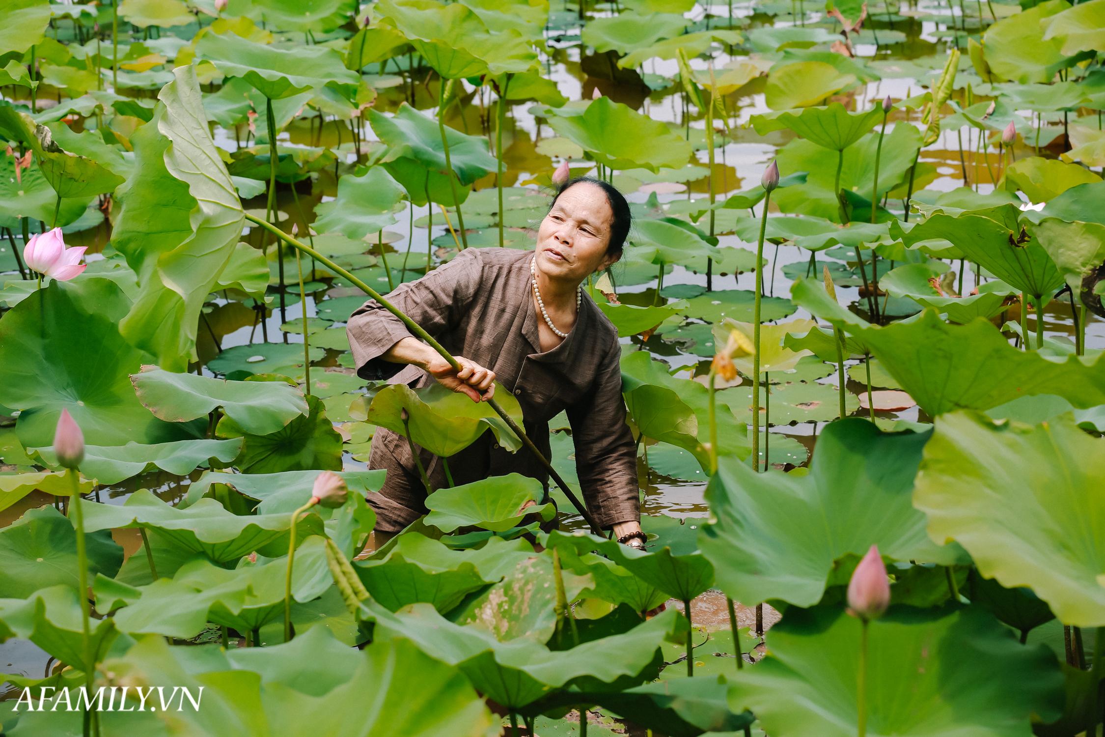 """Người phụ nữ chân quê ngoại thành Hà Nội với biệt tài """"bắt sen nhả tơ"""", làm nên chiếc khăn giá chẳng kém gì hàng hiệu nổi tiếng - Ảnh 1."""