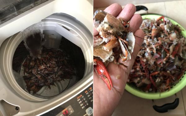 """Học mót trên mạng cách làm sạch tôm bằng máy giặt, cặp vợ chồng lười mếu máo nhận cái kết """"cực đắng"""""""