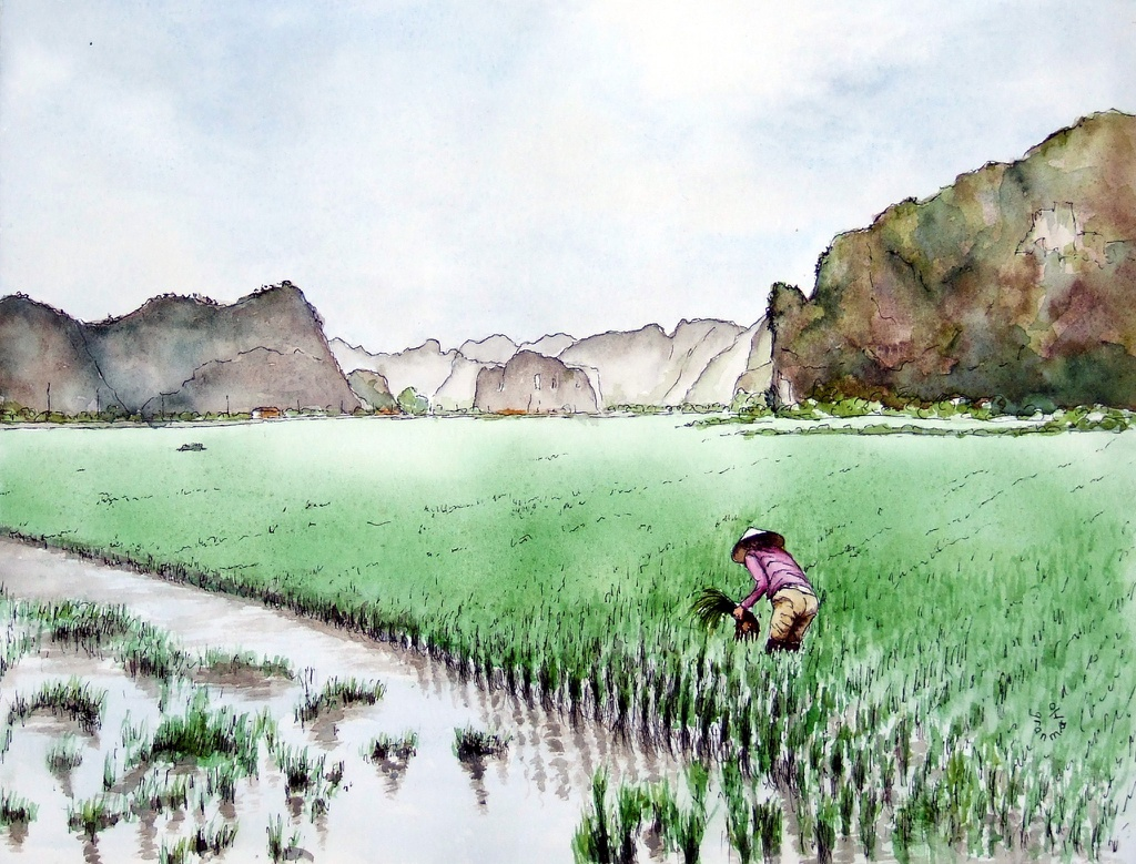 """Bộ tranh """"đẹp quá Việt Nam ơi"""" được vẽ bởi họa sĩ người Pháp  - Ảnh 4."""