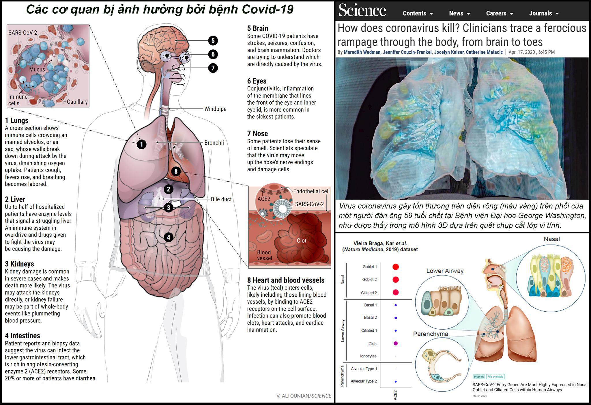 Chuyên gia cảnh báo: Những mặt trận Virus nCoV tấn công trên cơ thể con người - Ảnh 3.