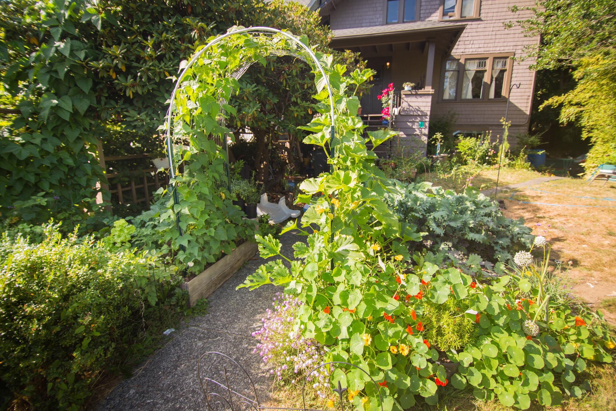 Cô gái xinh đẹp luôn tràn ngập năng lượng hạnh phúc khi trồng cả khu vườn toàn rau quả sạch - Ảnh 3.