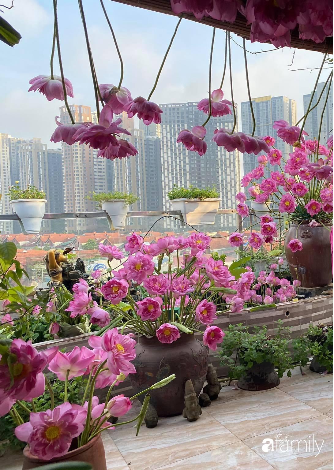 Bà mẹ Hà Nội tỉ mẩn dành 4 tiếng để tự cắm 1000 bông sen mang sắc màu mùa hạ lên sân thượng 200m² - Ảnh 9.