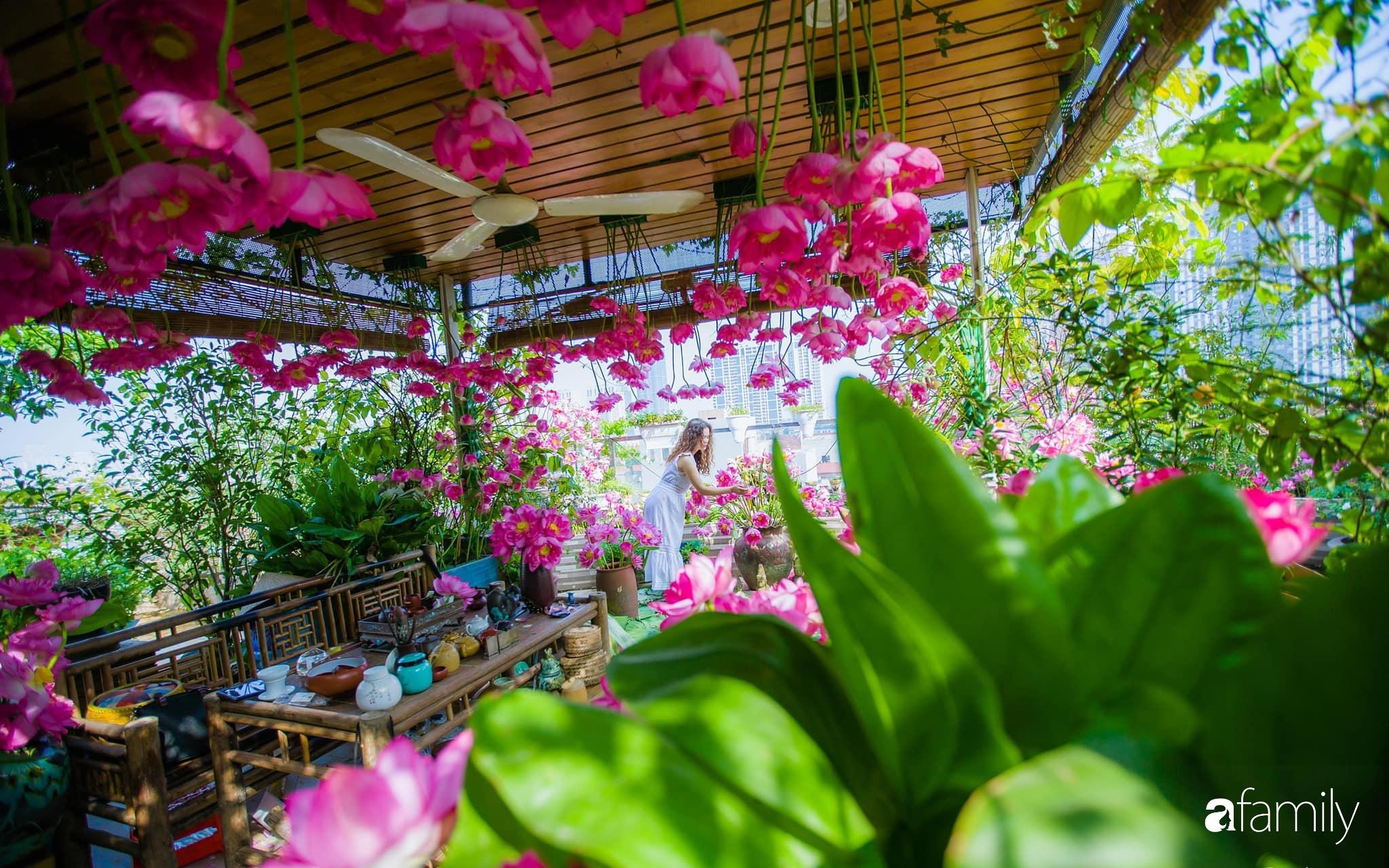 Bà mẹ Hà Nội tỉ mẩn dành 4 tiếng để tự cắm 1000 bông sen mang sắc màu mùa hạ lên sân thượng 200m² - Ảnh 1.