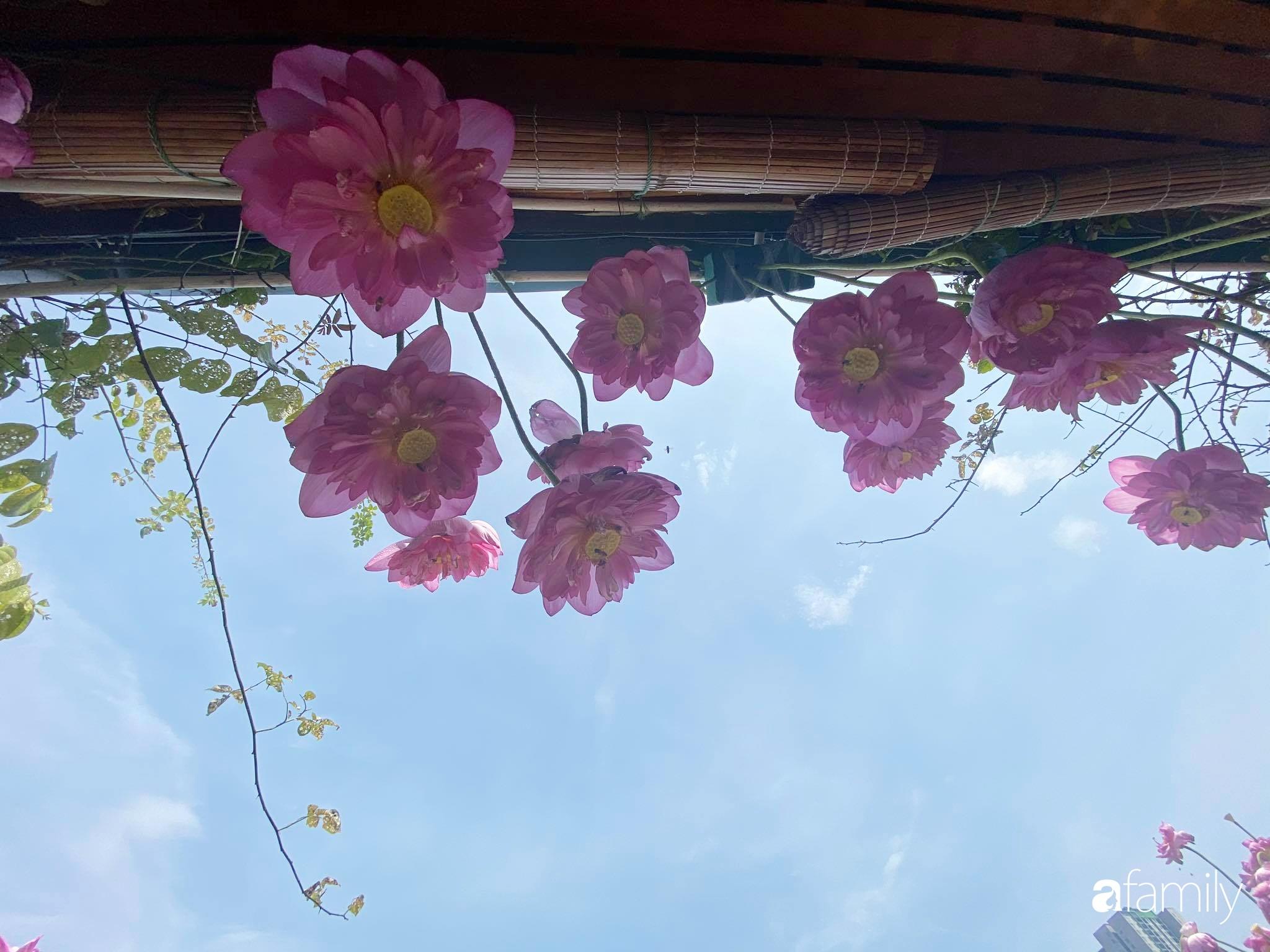 Bà mẹ Hà Nội tỉ mẩn dành 4 tiếng để tự cắm 1000 bông sen mang sắc màu mùa hạ lên sân thượng 200m² - Ảnh 12.