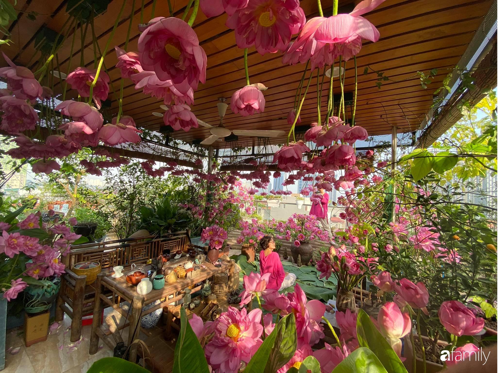 Bà mẹ Hà Nội tỉ mẩn dành 4 tiếng để tự cắm 1000 bông sen mang sắc màu mùa hạ lên sân thượng 200m² - Ảnh 10.