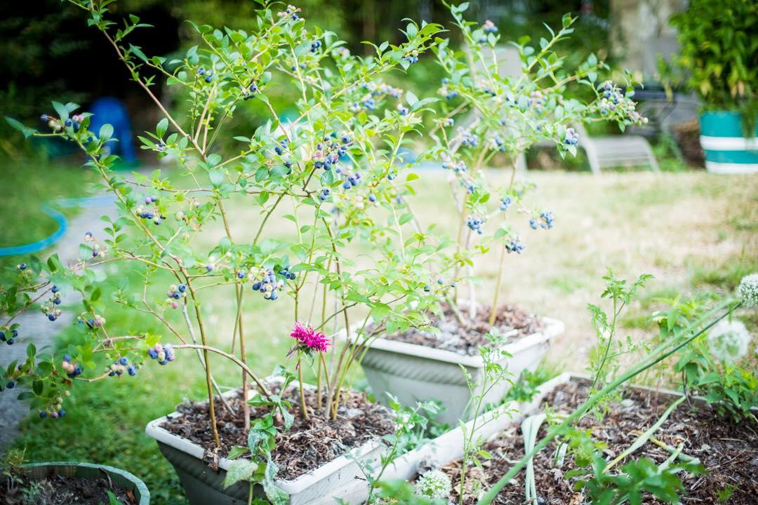 Cô gái xinh đẹp luôn tràn ngập năng lượng hạnh phúc khi trồng cả khu vườn toàn rau quả sạch - Ảnh 2.