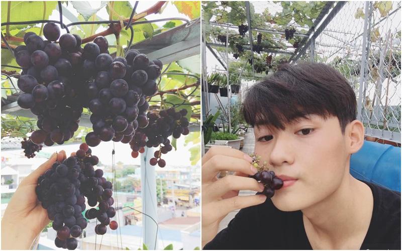 Chàng trai Sài Gòn trồng giàn nho đen trĩu quả trên sân thượng 50m²
