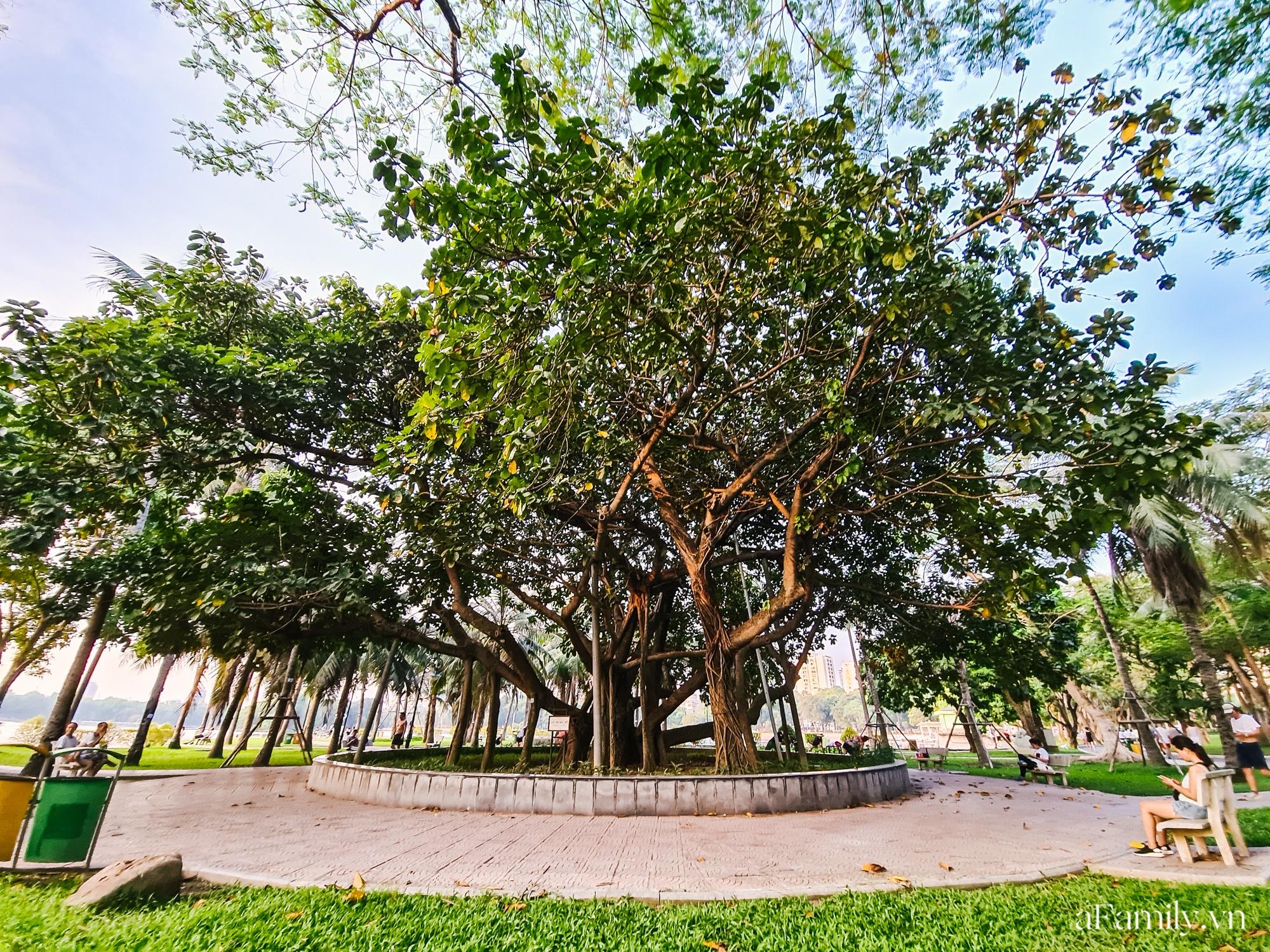 4000 đồng cho tour du lịch hè độc đáo ngay giữa thủ đô ở một công viên lâu đời vừa có đảo, vừa có rừng cây xanh, hồ cá trong lành - Ảnh 11.