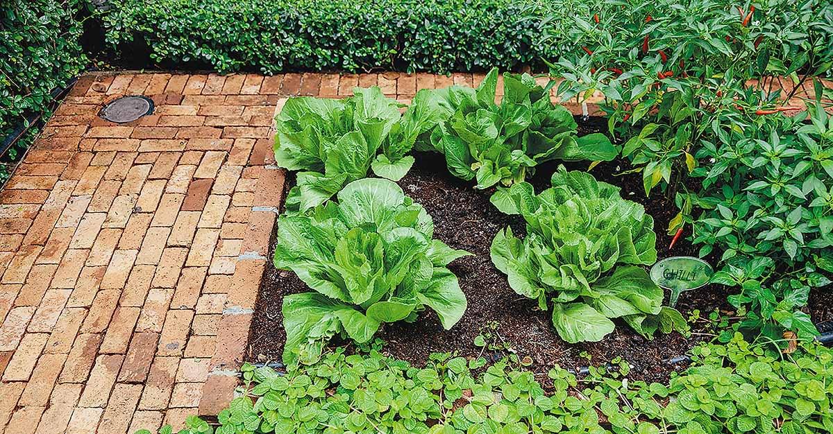 Những ý tưởng thiết thực tạo vườn rau xanh sạch trong nhà phố - Ảnh 1.