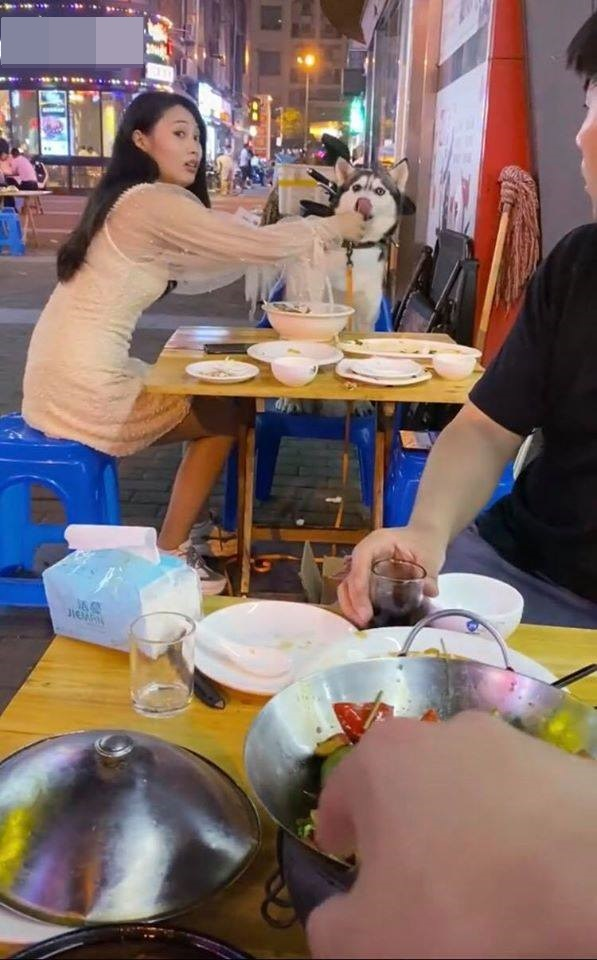 """Chú chó Husky đi ăn cùng chủ nhưng chạy sang bàn bên đòi ngồi cùng gái xinh, còn giở trò """"ăn cháo đá bát"""" khiến cô gái khóc thét - Ảnh 1."""