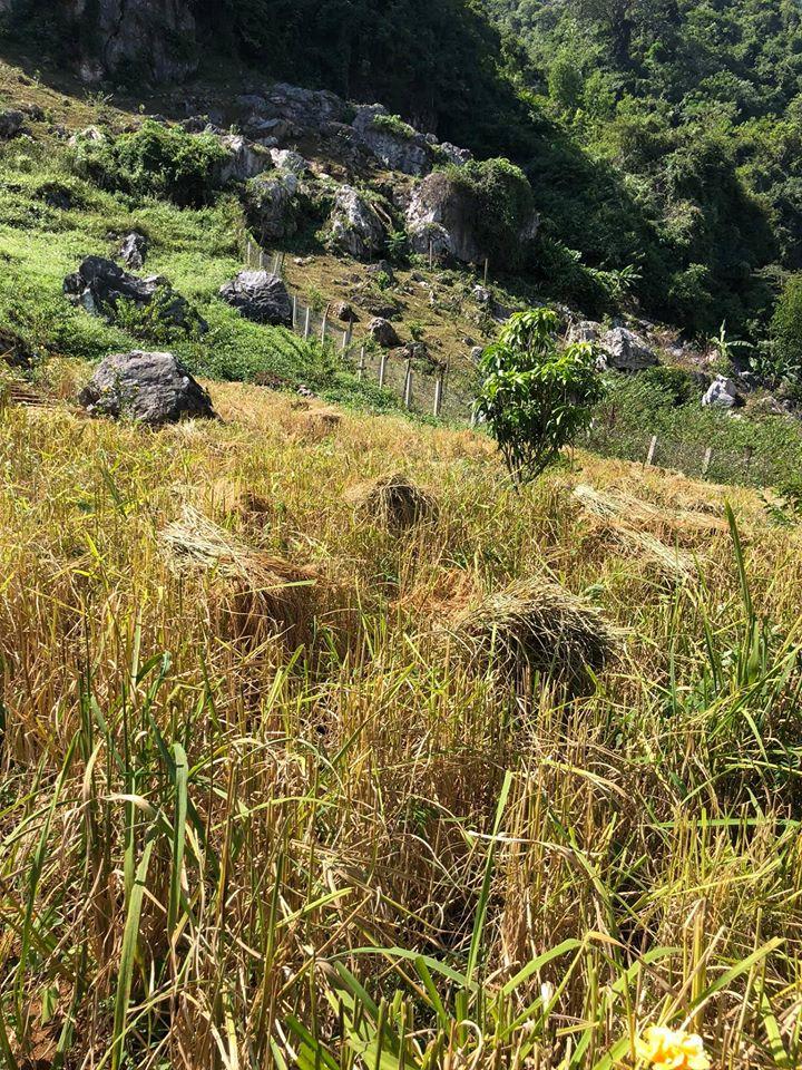 Quá áp lực và mệt mỏi với cuộc sống ở Hà Nội, vợ chồng trẻ quyết bỏ công việc ổn định, mang 200 triệu lên bản Áng Mộc Châu mua đất, xây nhà, làm vườn sống an yên - Ảnh 28.
