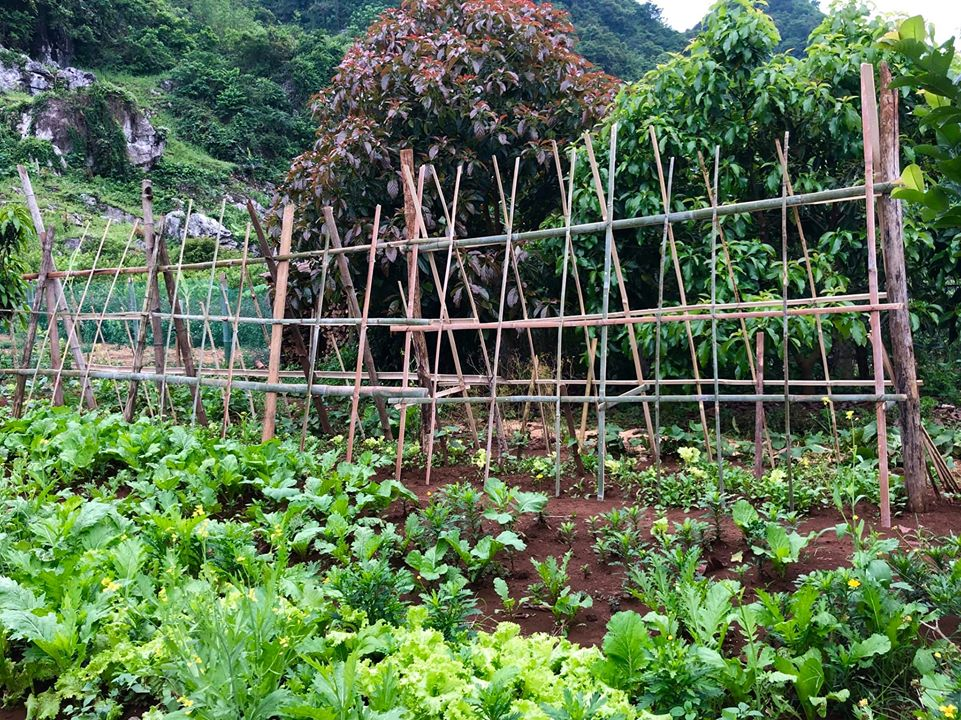 Quá áp lực và mệt mỏi với cuộc sống ở Hà Nội, vợ chồng trẻ quyết bỏ công việc ổn định, mang 200 triệu lên bản Áng Mộc Châu mua đất, xây nhà, làm vườn sống an yên - Ảnh 20.