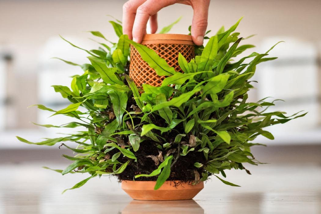 """Sản phẩm """"trợ lý ảo"""" thì tương lai cho phép chị em trồng cây mà không cần đất  - Ảnh 2."""
