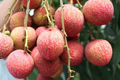 """Đừng ăn quá nhiều 7 loại quả này vào mùa hè vì như vậy chẳng khác nào """"tự đầu độc"""" cơ thể - Ảnh 5."""