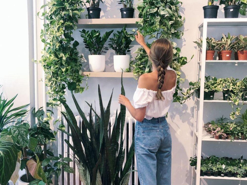 Những lời khuyên hiệu quả nhất giúp chăm sóc cây trồng trong nhà tốt tươi - Ảnh 2.