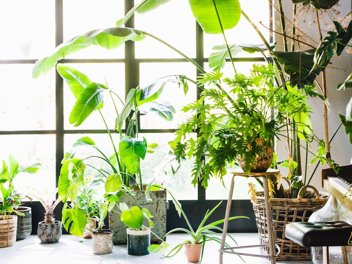 Những lời khuyên hiệu quả nhất giúp chăm sóc cây trồng trong nhà tốt tươi - Ảnh 4.