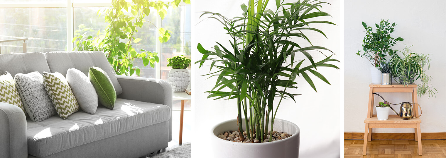 Những lời khuyên hiệu quả nhất giúp chăm sóc cây trồng trong nhà tốt tươi - Ảnh 1.