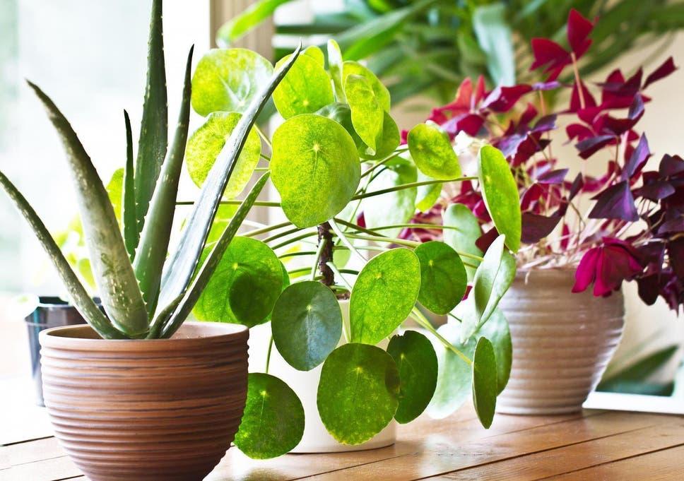 Những lời khuyên hiệu quả nhất giúp chăm sóc cây trồng trong nhà tốt tươi - Ảnh 7.