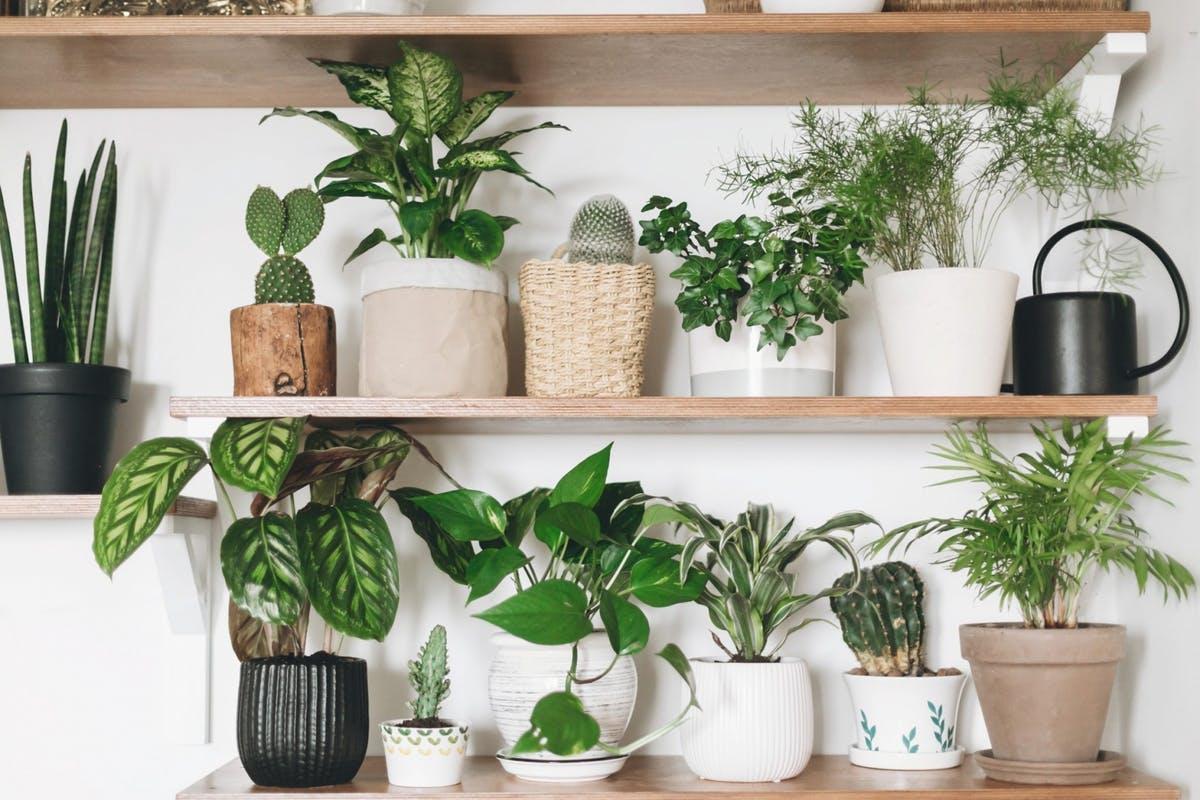 Những lời khuyên hiệu quả nhất giúp chăm sóc cây trồng trong nhà tốt tươi - Ảnh 5.