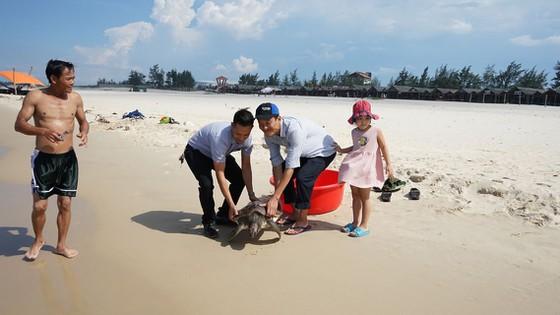 Quảng Trị: Cứu hộ và thả một cá thể rùa quý hiếm về biển - Ảnh 1.