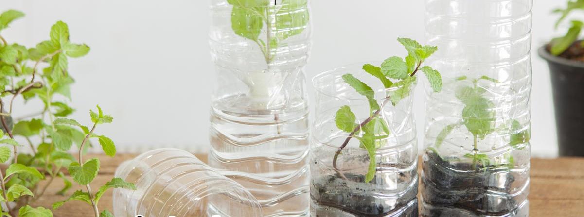 Cắt rau bỏ trong chai nhựa, cách làm đơn giản nhưng thu hoạch rau nhiều bất ngờ - Ảnh 1.