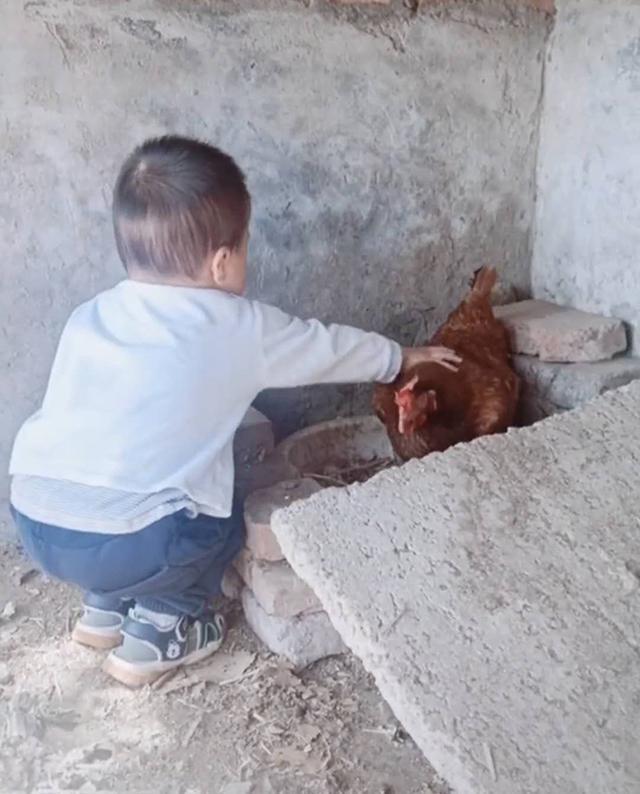 Thấy con suốt ngày đòi vào chuồng gà chơi, người mẹ bí mất đi theo mới giật mình phát hiện con trai quá thông minh - Ảnh 1.
