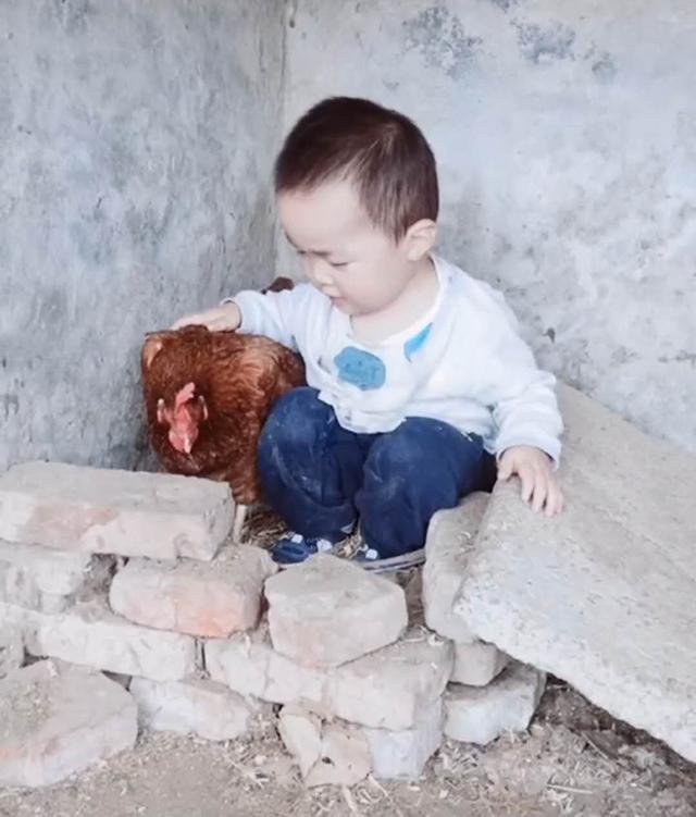 Thấy con suốt ngày đòi vào chuồng gà chơi, người mẹ bí mất đi theo mới giật mình phát hiện con trai quá thông minh - Ảnh 2.