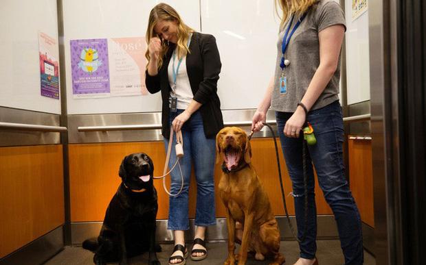 Công ty cuồng động vật nhất quả đất gọi tên Amazon: Từ quảng cáo cho đến từng ngóc ngách, đâu đâu cũng thấy cún cưng!