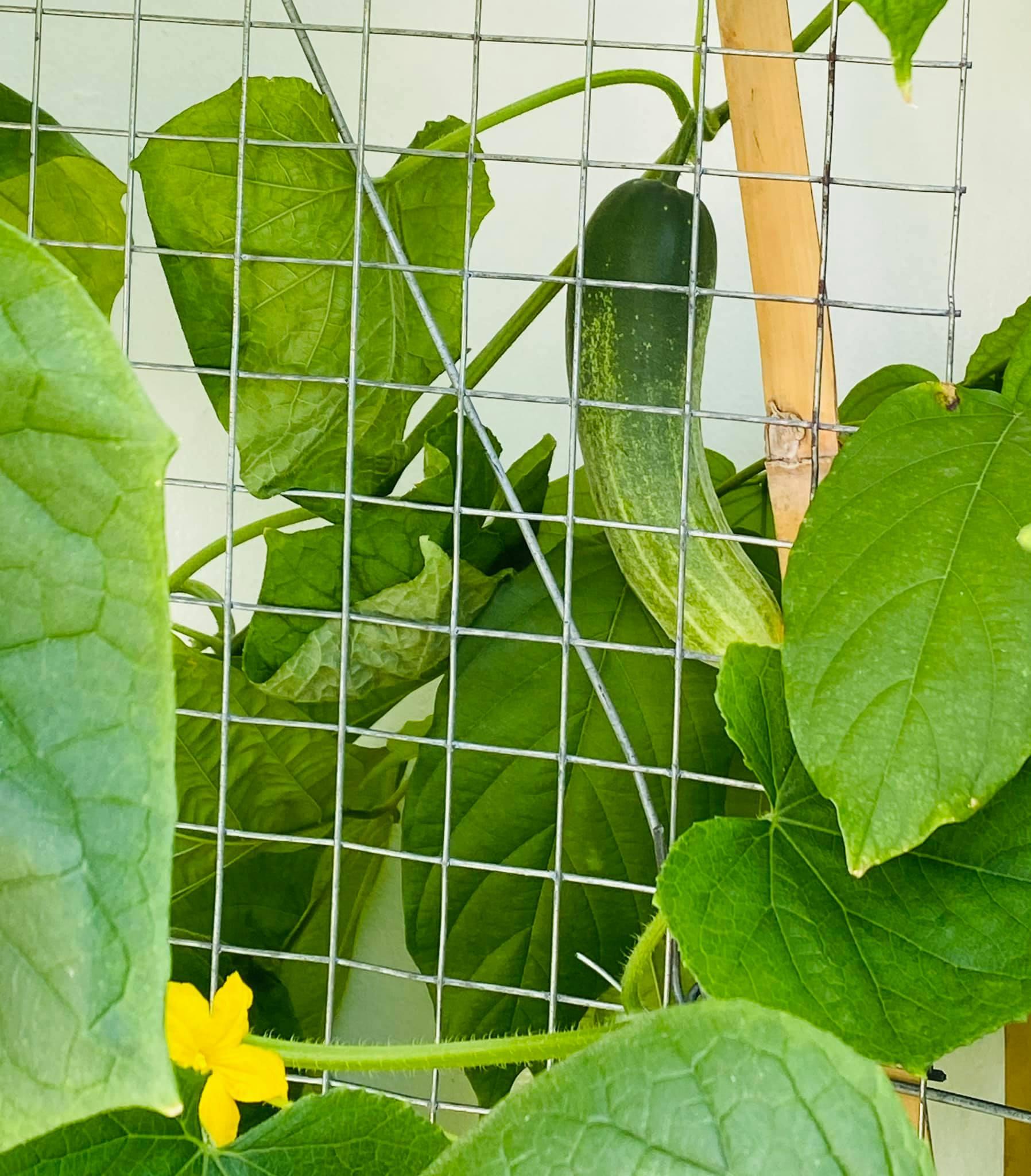 MC Đại Nghĩa thư giãn tinh thần bằng cách trồng rau và nấm sạch trên sân thượng nhà mình ở quận 7, TP HCM - Ảnh 5.
