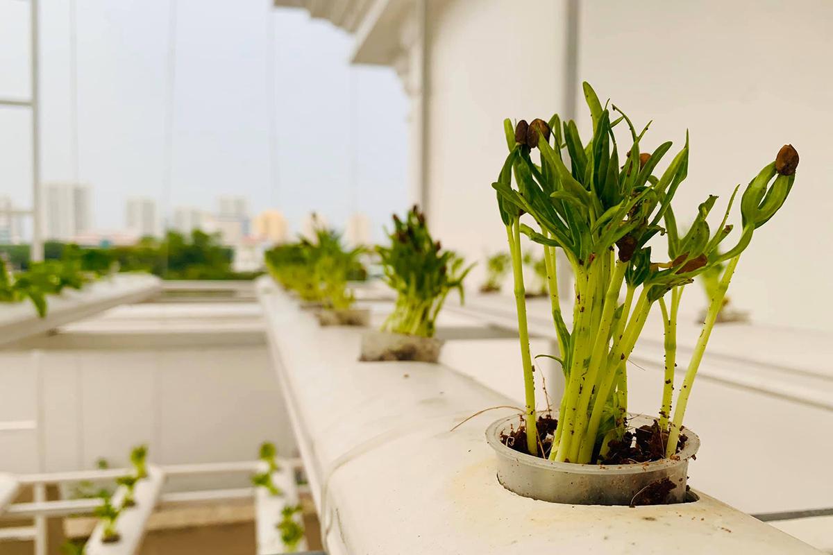 MC Đại Nghĩa thư giãn tinh thần bằng cách trồng rau và nấm sạch trên sân thượng nhà mình ở quận 7, TP HCM - Ảnh 7.