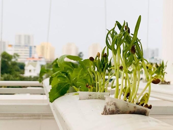 MC Đại Nghĩa thư giãn tinh thần bằng cách trồng rau và nấm sạch trên sân thượng nhà mình ở quận 7, TP HCM - Ảnh 3.